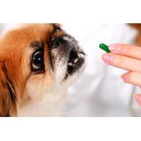Витамины, добавки для собак