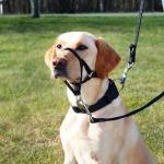 """Шлея """"TRIXIE"""" для собак для дрессировки """"Top Trainer Training Harness"""",S,35-42см/22см"""