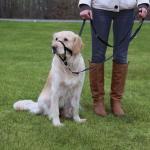 """Шлея """"TRIXIE"""" для собак для дрессировки """"Top Trainer Training Harness"""", L,50-57см/31см"""